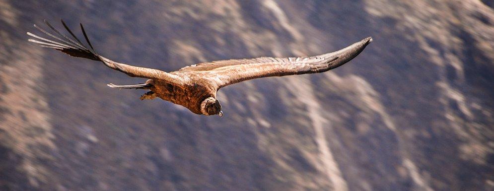 Pérou Classique Tour, Voyage au Machu Picchu - La Croix du Condor, Puno et l'Altiplano