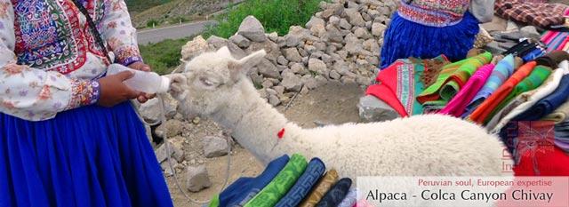 Cruz del Condor; Puno y el Altiplano