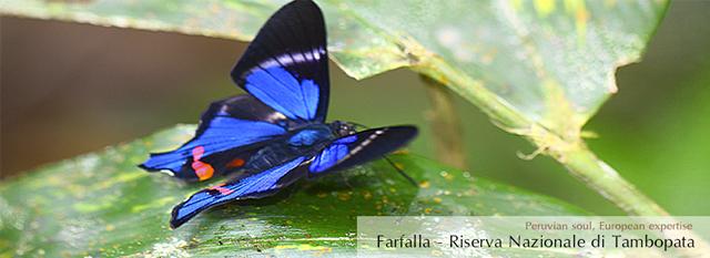 viaggio nella foresta amazzonica peruviana: Puerto Maldonado Viaggi – Parco Nazionale di Tambopata 4 giorni