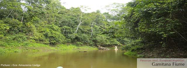 Avventura nella Foresta Amazzonica, viaggio a puerto maldonado: gamitana river