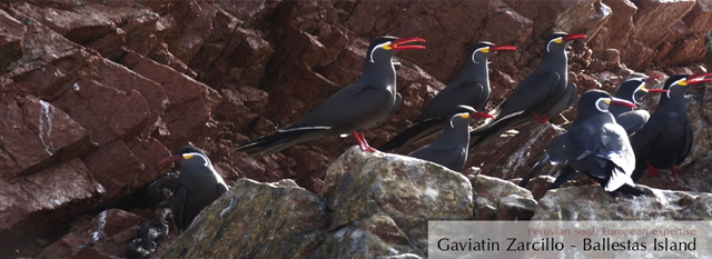 Tours to Ballestas Islands: