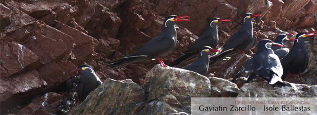 Viaggi athe Ballestas Islands