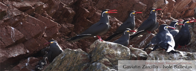 Viaggi alle Isole Ballestas: