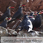 Viaggi alle Isole Ballestas: Perù - Tour Classico - Viaggio in Perù