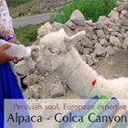 Tours to Colca Canyon: The Flight of the Condor
