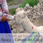 Viaggio nel Canyon Colca: Il volo del Condor