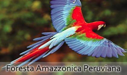 viaggi nella Foresta Amazzonica Peruviana