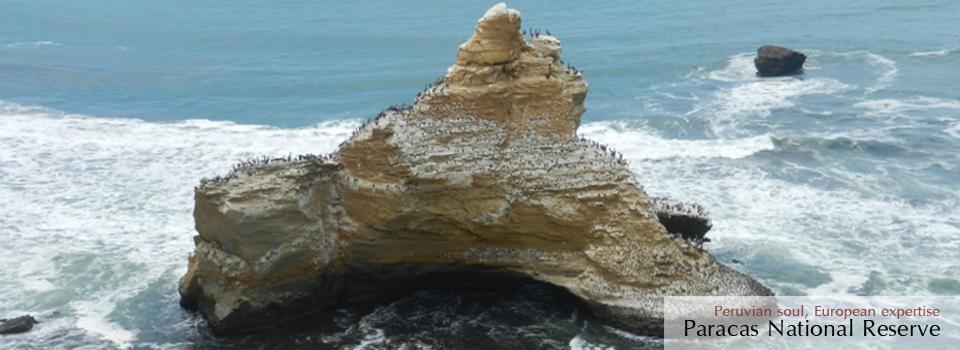 Las Islas Ballestas y la Reserva Nacional de Paracas: los Galápagos Peruanos