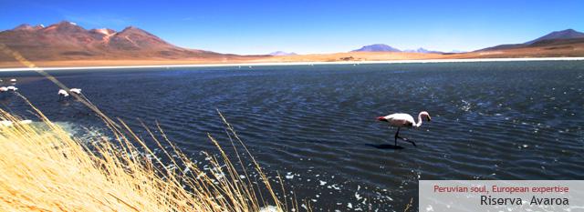 Cile Bolivia Peru Tour: Il deserto di sale