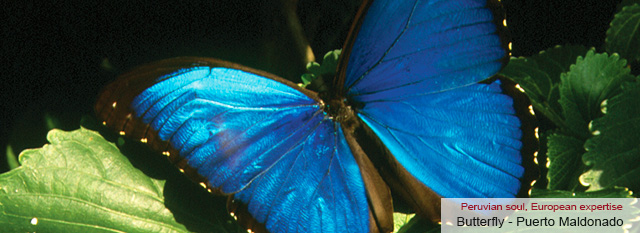 Inkaterra Hacienda Concepcion - Butterfly House - Puerto Maldonado